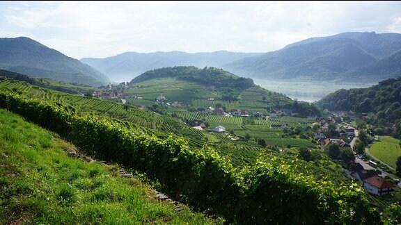 Blick über Weinberge in ein Tal mit einem Dorf.