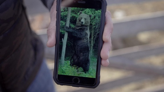 Smartphone mit Bärenfoto
