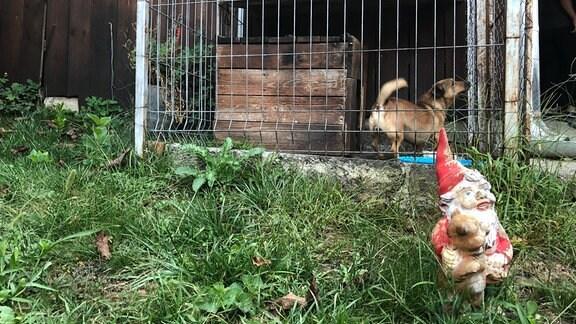 Gartenzwerg und Hund