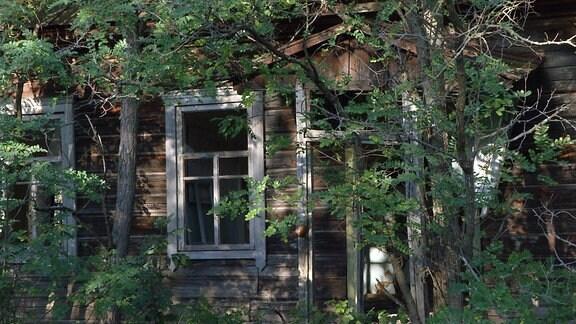 Ein Haus hinter Bäumen.