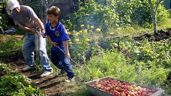 Ein mann und ein Junge ziehen eine Wanne mit Äpfeln durch einen Garten.