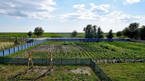 Gemüsegarten von Dan Hancerenco in Letea