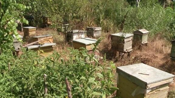 Bienestöcke von Imker Costel Gresala.