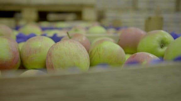 Äpfel in einem Kühllhaus