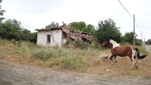 Pferd vor einer Ruine.