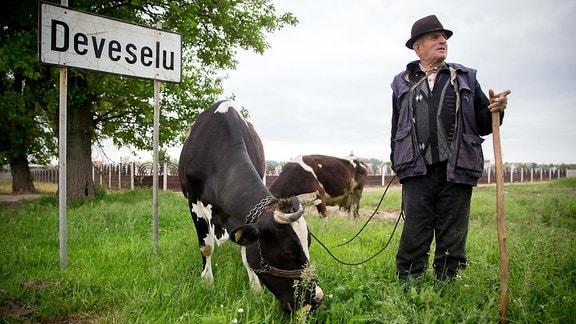 Ein Hirte steht am 12.05.2016 in Deveselu in Rumänien mit seinen Kühen am Ortsschild. Hier in der Nähe steht ein Nato-Raketenabwehrsystem