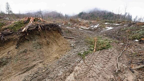 Gerodete Fläche in Rumänien.