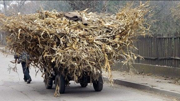 Ein Handwagen, der mit Mais beladen ist. Die Fracht ist mehrere Meter hoch gestapelt.