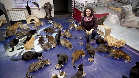 Katzen in der Eremitage in St. Petersburg