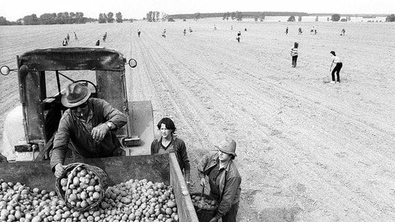 Jugendliche im Einsatz bei der Kartoffelernte der LPG Dahme