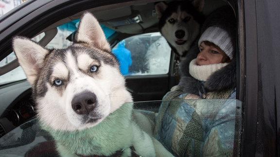 Ein sibierischer Husky und eine Frau in einem Auto.