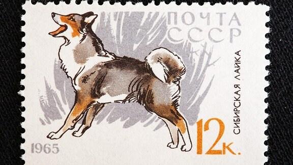 Briefmarke, UdSSR, 1965 / Siberian Husky