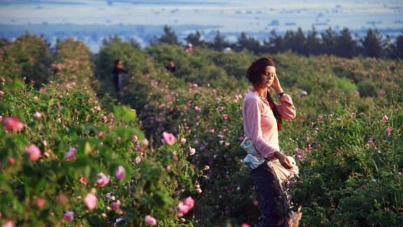 Eine Frau pflückt Rosen.