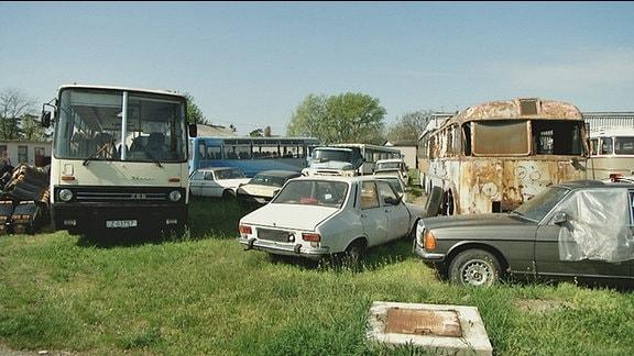 Verschiedene alte Autos stehen auf einem Schrottplatz
