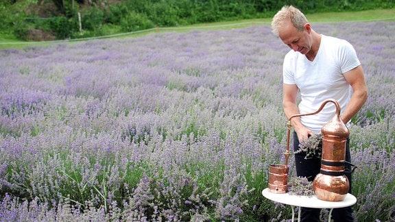 Ein Mann steht vor einem Lavendelfeld und stzellt mit einer Aparatur Lavendeltee her.