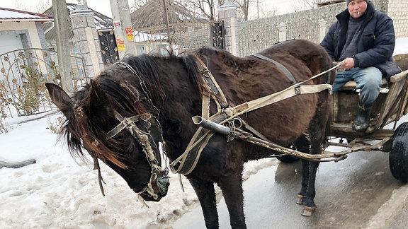 Ein Pferd, das vor eine Kutsche gespannt ist.