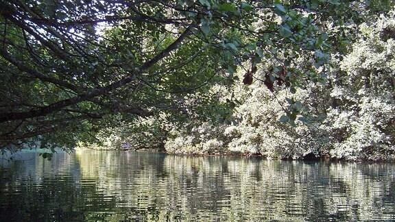 Ein bewaldetes Ufer
