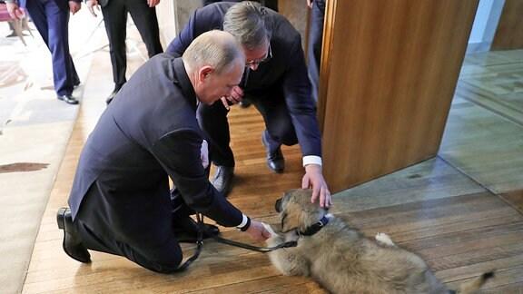 Wladimir Putin Aleksandar Vucic streichelm einen Schäferhund.