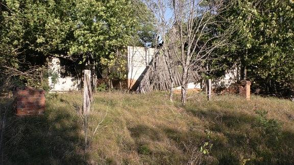 Überreste eines verfallenen Hauses im Wald.
