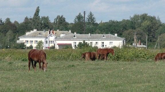 Braune Pferde auf einer Wiese. In der Ferne ein weißer Gebäudekomplex.