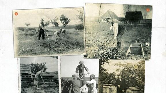 Polen bei der Feldarbeit