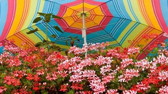 Ein bunter Sonnenschirm steht auf einem mit Blumen bepflanzten Balkon eines Wohnhauses .