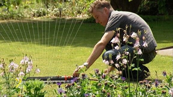 Ein Mann mit einem grauen T-Shirt gießt den Rasen mithilfe einer Gartensprenganlage. Im Vordergrund sind violette Blumen zu sehen.