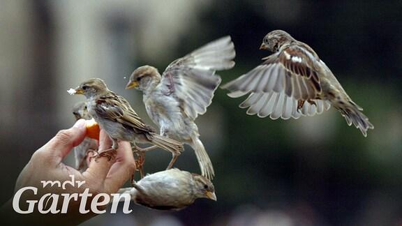 Vier Vögel landen auf einer Hand.