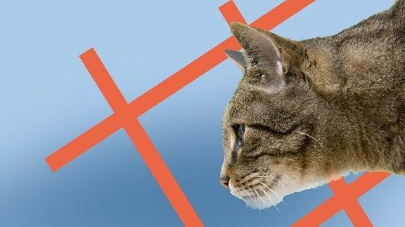 Eine Katze vor einem roten Rechteck