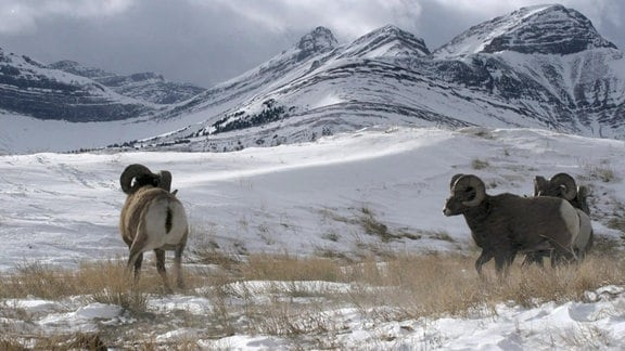Die schroffe Bergwelt der Rocky Mountains und andere Gebirgsketten British Columbias.