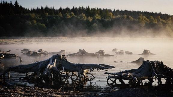 Ein See im Nebel mit Wald im Hintergrund und mystischen Baumwurzeln, die aus dem Wasser ragen