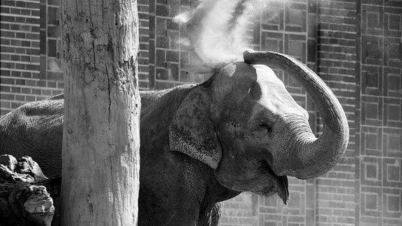 Elefantendame Thura gestorben