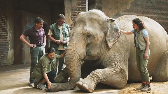 Tierärtztin Dr. Mertens und 3 Pflegerinnen stehen um einen Elefanten herum