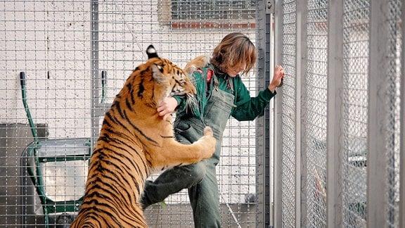 Ein Tiger greift eine Tierpflegerin an
