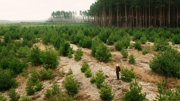 Ein Förster steht auf einer neu bepflanzten Waldlichtung