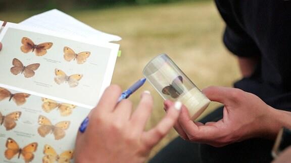 Schüler bestimmen die Art eines gefangenen Schmetterlings