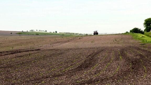 Die ostdeutsche Landwirtschaft ist geprägt von riesigen Feldern