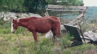 Ein abgemagertes Pferd steht im Freien.