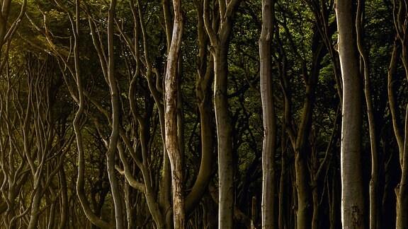 "Kliffkueste 01 (from the series ""Woodlands"" / aus der Serie ""Woodlands""), C-Print, 2015 Courtesy Mat Hennek"
