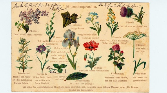 Postkarte mit Blumensprache um 1900