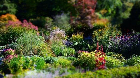 Karl-Foerster-Garten Foto: pixabay