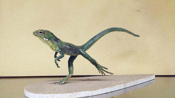 Modell Eudibamus von Peter Mildner