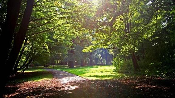 Herbststimmung im Großen Garten in Dresden