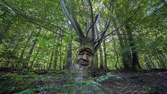 Geschnitztes Baumgesicht in einem Baumstamm