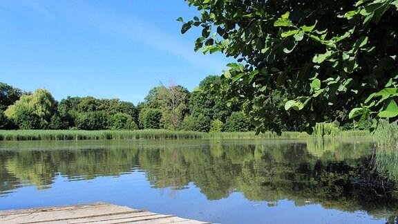 Teich an der Orangerie in Bendeleben.