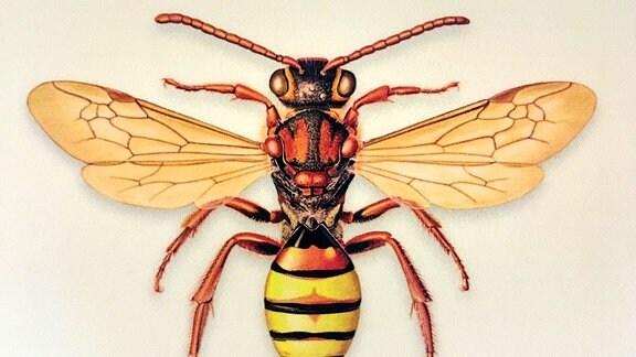 Bienen-Illustration