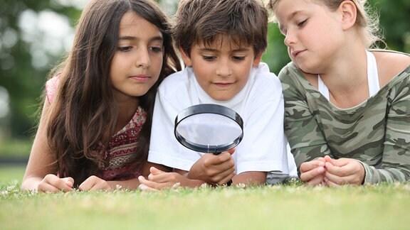 Kinder mit einer Lupe begutachten ein Stück Wiese.
