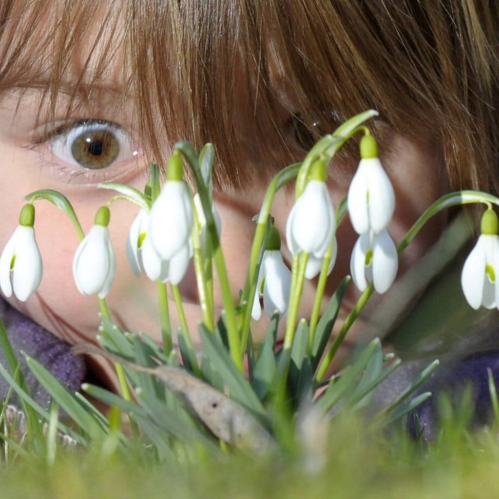 Fruhbluher Pflanzen Pflegen Und Verwildern Spezial Mdr De