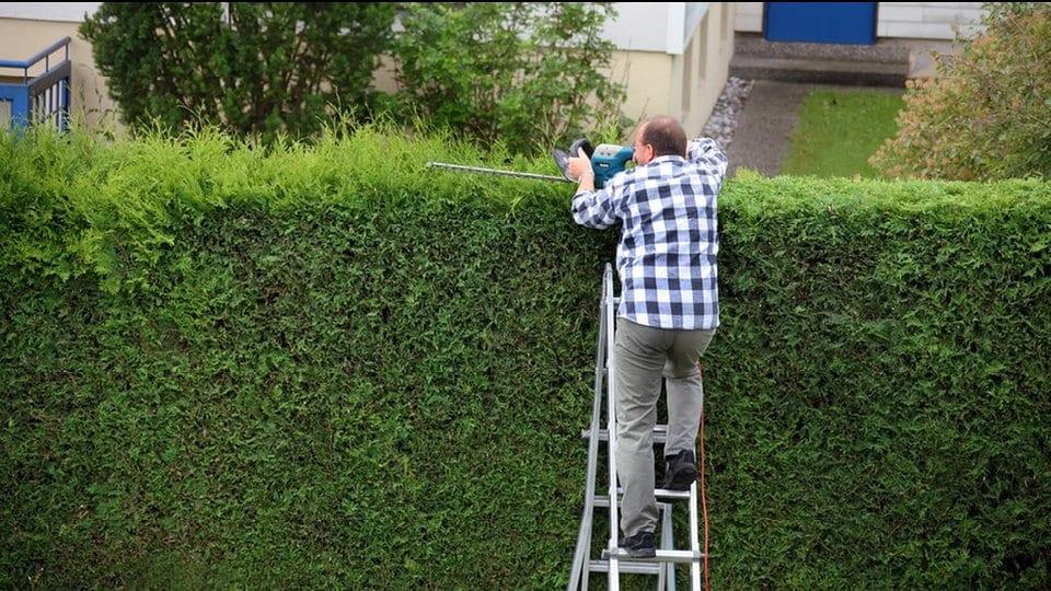 Hervorragend Was am Gartenzaun und an der Grundstücksgrenze erlaubt ist   MDR.DE QD47
