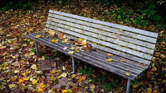 Ein Bank steht von Herbstlaub umgeben an einem Weg